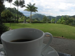 Jamaican Blue Mountain coffee at the Craighton Estate Photo by Kimberley (c)2013